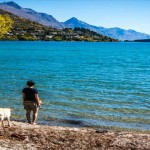 5 Tips for traveling with your dog